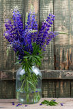 A bouquet of lupines in a glass jar Royalty Free Stock Images