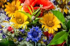 Bouquet luxuriant d'été des wildflowers avec des pavots, marguerites, plan rapproché de bleuets photo libre de droits