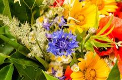 Bouquet luxuriant d'été des wildflowers avec des pavots, marguerites, plan rapproché de bleuets image libre de droits