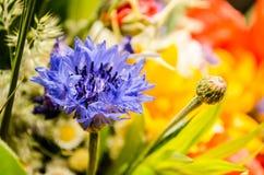 Bouquet luxuriant d'été des wildflowers avec des pavots, marguerites, plan rapproché de bleuets photos stock