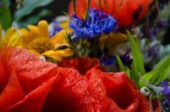 Bouquet luxuriant d'été des wildflowers avec des pavots, marguerites, plan rapproché de bleuets photographie stock libre de droits