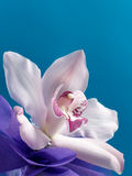 Bouquet of magenta orchids on the beautiful blue background Stock Images