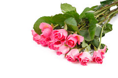 Bouquet of many pink roses. Lying on white background Stock Photo
