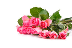 Bouquet of many pink roses. Lying on white background Stock Photography