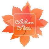 A bouquet of maple leaves. Frame with the inscription Hello Autumn. Concept for a seasonal sale. Royalty Free Stock Image