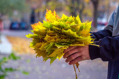Bouquet of maple leaves, a gift for your favorite girl Royalty Free Stock Photography