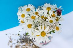 Bouquet with Marguerite and meadow flowers on blue-white background Royalty Free Stock Photo