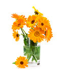 Bouquet of marigold in glass vase Royalty Free Stock Images