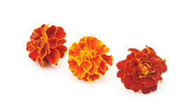 Bouquet of marigolds. Stock Photos