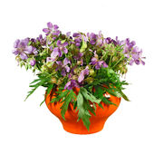 Bouquet of meadow flowers in orange pot. Isolated. Stock Images