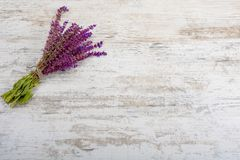A bouquet of medicinal herb salvia on a wooden background. For text. Copy space, flatly royalty free stock images