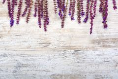 A bouquet of medicinal herb salvia on a wooden background. For text. Copy space, flatly royalty free stock photo