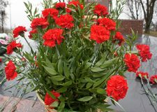 Bouquet at the memorial. Red flowers in a basket on memareale memory of the dead in the war Stock Photography