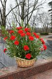 Bouquet at the memorial. Red flowers in a basket on memareale memory of the dead in the war Royalty Free Stock Photography