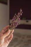 Bouquet of mentha pulegium herbs Stock Images
