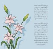Bouquet merveilleux de ressort avec des lis Photos stock