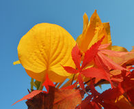 Bouquet of milticolor leaves Stock Photo