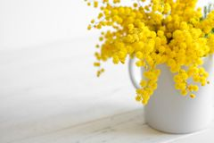 Bouquet of mimosa flowers on white wooden background. Springtime. Bright bouquet of mimosa flowers on white wooden background. Springtime stock image