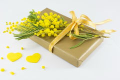 Bouquet of mimosa pudica and a wrapped present Royalty Free Stock Photo