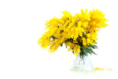 Bouquet of mimosa in vase Stock Photo