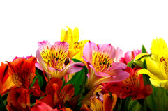 Bouquet of miniature day lilies Stock Photography