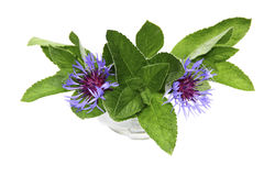 Bouquet of mint and cornflowers in a vase on a white background Royalty Free Stock Photos