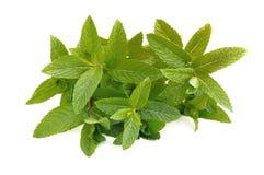 Bouquet of mint leaf Stock Photos