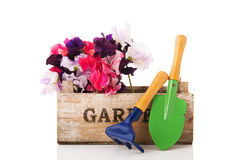 Bouquet mixed Lathyrus in garden crate Stock Images