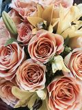 Bouquet of Mother's Day or valentine flowers in peach and cream Stock Photos