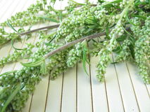 Bouquet of mugwort Stock Image