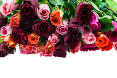 Bouquet of multi-colored roses isolated on white Stock Images