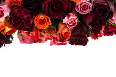 Bouquet of multi-colored roses isolated on white Stock Photo