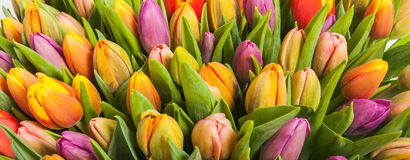 Bouquet of multicolor tulips Royalty Free Stock Photos