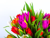 Bouquet of multicolor tulips. fresh spring flowers Stock Photos