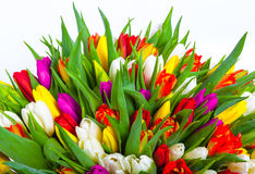 Bouquet of multicolor tulips. fresh spring flowers Royalty Free Stock Images