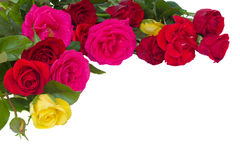Bouquet of multicolored roses Stock Image