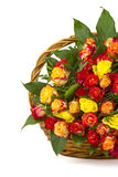 A bouquet of multicolored roses Stock Images