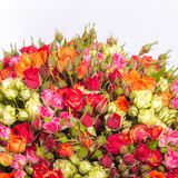 Bouquet of multicolored roses Stock Images