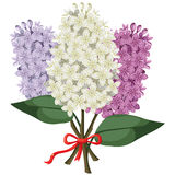 Bouquet of multicolored three branches of lilac Royalty Free Stock Image