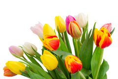 Bouquet of multicolored   tulip flowers in white Stock Photography