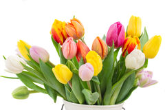 Bouquet of multicolored   tulip flowers in white pot Stock Photos