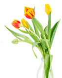 Bouquet of multicolored   tulip flowers in white pot Stock Photography