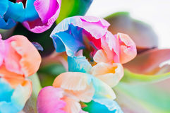 Bouquet  of multicolored tulips Royalty Free Stock Photos