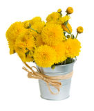 Bouquet of mums in pot Stock Images