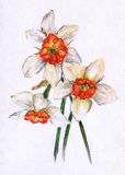 Bouquet of narcissus. Daffodils. Pastel drawing on white background Royalty Free Stock Images