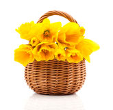 Bouquet of narcissus flowers in a basket royalty free stock photos