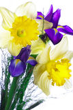Bouquet of narcissus and iris Royalty Free Stock Images