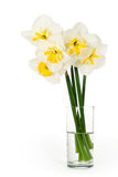 Bouquet of narcissuses in a glass Stock Image