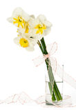Bouquet of narcissuses in a glass with a bow Stock Photos