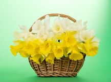 Bouquet of narcissuses in a wattled basket Stock Photography